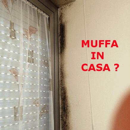 Hai della muffa in casa ecco 10 cose da fare ing - Muffa e umidita in casa ...
